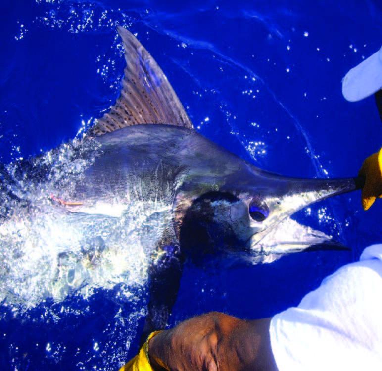 A São Nicolau, pêche de 4 ou 8 heures, de poissons tels marlins, wahoos ou thons, à bord d'un bateau de 9,30 mètres