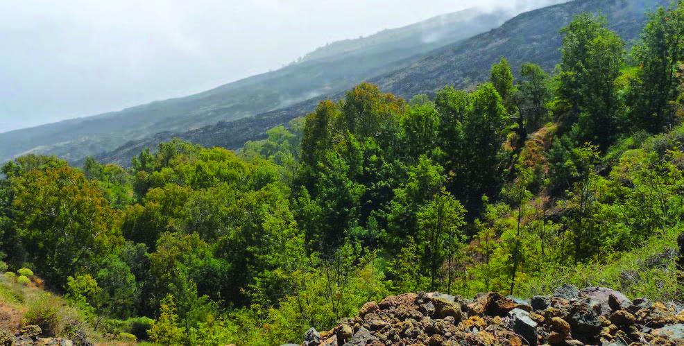 Randonnée de 4 et 5 heures menant à la ville de Mosteiros en passant par le parc naturel de Monte Velha et par la petite communauté de Pai António avec ses plantations de bananes et de café